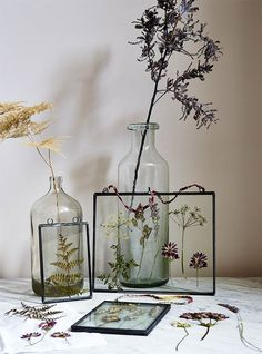 Master the art of flower pressing with this simple how-to guide. Display dried plants and flowers, such as fern leaves and cow parsley stems, in glass frames for a lasting seasonal arrangement.