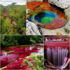 """Caño Cristales Colombia """"The River of Five Colors"""" Rainbow River, Time Travel, Places To Travel, Places To See, Places Around The World, Travel Around The World, Around The Worlds, Panama, Wonderful Places"""