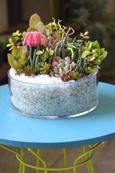 Succulent Table Arrangement.  https://www.facebook.com/pages/Dalla-Vita/408775929186581?ref=tn_tnmn