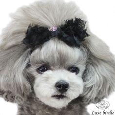 When ur dog has better hair than you lol . So cute! 拡大イメージ表示