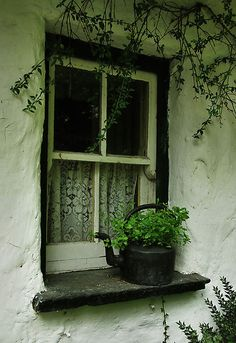 cottage window...