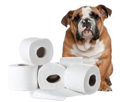 Dog potty training can take several weeks or even months. However, it is important to note that the pace at which dogs learn differs. Therefore, be patient while training your dog because with proper training, the dog will know your requirements.