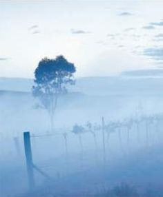 McWilliam's Barwang Vineyard is located in the cool-climate Hilltops region near Young in NSW, Australia.