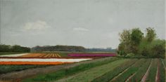 Bulb fields near Bergen (30 x 60 cm) by Gineke Zikken