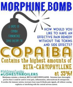 COPAIBA OIL + BALSAM FIR OIL + FRANKINCENSE OIL = the 'Morphine Bomb' for natural pain relief