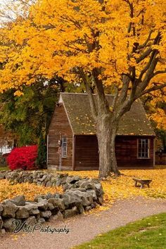 Fall Gallery Massachusetts - New England fall foliage Seasons Of The Year, Best Seasons, New England Fall Foliage, Autumn Scenes, Fall Pictures, Senior Pictures, Belle Photo, Autumn Leaves, Golden Leaves