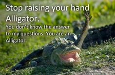 come on alligator...
