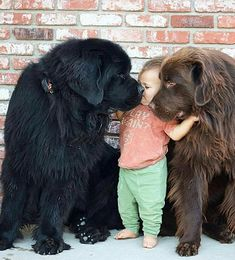 Cute dog photos - Page 8 of 23 - Gloria Love Pets Dog Training School, Best Dog Training, Training Tips, Cat Love, I Love Dogs, Cute Dogs, Newfoundland Puppies, Cute Dog Photos, Dog Pictures
