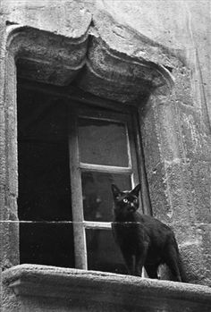 Black Cat behind window: Brassai (Gyula Halsz, Untitled, (City Cats), Crazy Cat Lady, Crazy Cats, Animal Gato, Cat City, Photo Chat, Cool Cats, Black And White Photography, Cats And Kittens, Cat Lovers