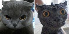 Before And After Animal Baths - 14 Pics