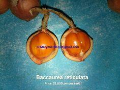 Baccaurea reticulata
