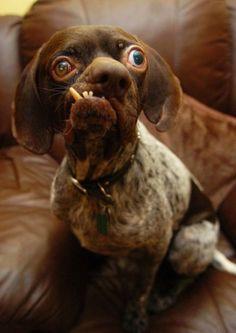 Ugly Dog 04