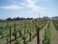 Brookwlater Winery in Washington