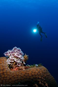 Diving among Coral Reefs
