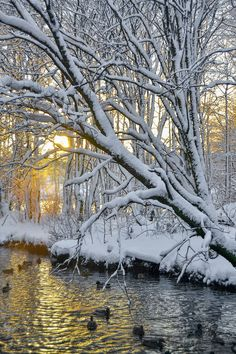 Winter in Bergen, Norway. Winter Szenen, Hello Winter, Winter Magic, Winter Time, Landscape Photos, Winter Banner, Winter Poster, Beautiful Winter Scenes, Snow
