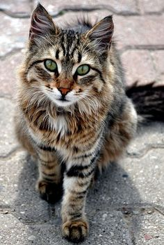 Wow it is a beautiful cat!! <3