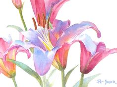 Watercolor Lily Watercolor lily close-up by