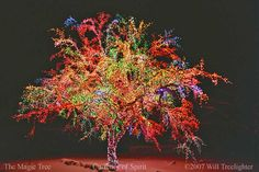 Don't forget to visit the Magic Tree while in town this holiday season! - Columbia, Missouri.