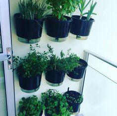 Viável, prática e super compacta, as hortas de parede também ganham cada vez mais espaço e tornam-se uma ótima opção para quem deseja ter em casa ervas, temperos e hortaliças (ou até mesmo flores) mas dispõem de pouco espaço.😍  Com o suporte de parede para fixação em parede, é possível montar uma hortinha com os vasos autoirrigáveis que garantem a umidade da planta e dispensam as regas diárias. A @monike_farias pensou em tudo e já montou a hortinha na varanda, onde as plantas recebem luz…
