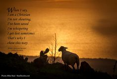 """""""The Lost Sheep"""" The Lost Sheep, I Said, Social Media Site, Choose Me, Christianity, Prayers, Author, Sayings, Movie Posters"""