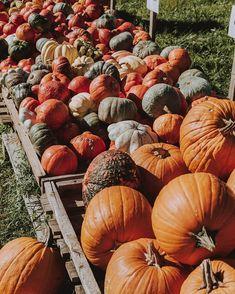 SARAH   Photographer (@fotografierende) • Instagram-Fotos und -Videos Enjoy It, Instagram Accounts, Pumpkin, Videos, Pictures, Photography, Photos, Buttercup Squash, Pumpkins