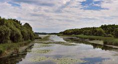 Ismerd meg! A Kis-Balatonon ékessége a Kányavári-sziget River, Blog, Outdoor, Outdoors, Blogging, Outdoor Games, The Great Outdoors, Rivers