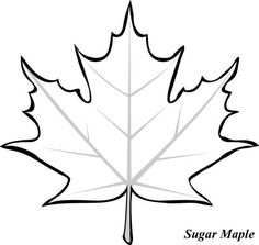 Maple Leaf, : Sugar Maple Leaf Picture Coloring Page