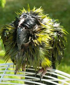 """""""She-o-wer!"""" Warm Weather Tips For Exotic Pets"""