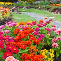 It's time for your warm #annuals! Here's a #gardening #blog to get you started.