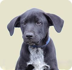 DFA RESCUE ACROSS THE NATION; Rescue info: Natchitoches, LA - Meet Elvis a Puppy for Adoption.