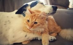 Cats and Dogs Love Each Other