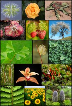 Plantas o hierbas medicinales peligrosas. Efectos adversos de algunas de ellas. http://splashurl.com/orcz577