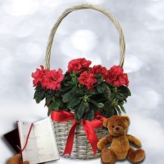 Red Azalea Basket with Teddy Bear and Diary Beautiful Red Azalea Plant in Willow BasketPersonalise your message at the checkout basket. Orders must arrive by Sunday 18th December for Christmas Delivery.This gorgeous festive red Azalea is the id http://www.MightGet.com/january-2017-11/red-azalea-basket-with-teddy-bear-and-diary.asp