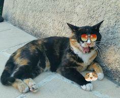 Enjoy photo #lilithecat