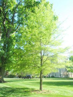 24 Best Muhlenberg College Campus Images College Campus Archangel