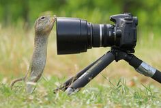 Camera Stretching by Julian Rad on 500px