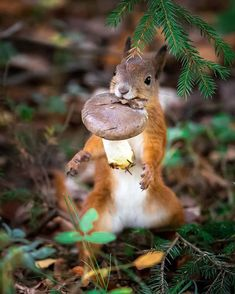 Forest Animals Wildlife Photography by Ossi Saarinen Forest Animals, Nature Animals, Animals And Pets, Baby Animals, Funny Animals, Cute Animals, Wildlife Nature, Animals Images, Wild Animals