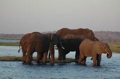 Botswana Chobe rivier