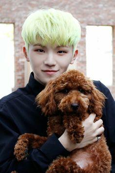Twitter @pledis_17 update~ Who is cuter? The dog or Woozi?