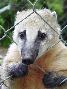 dartmoor zoo - Google Search