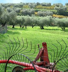 Outdoor Furniture, Outdoor Decor, Farms, Bench, Shops, Garden Furniture Outlet, Haciendas, Homesteads, Tents