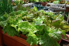 Website describes what container to plant your vegetable garden in