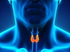 Είναι καρκίνος της κεφαλής και τραχήλου Thyroid Gland, Thyroid Hormone, Thyroid Health, Fibromyalgia Causes, Thyroid Supplements, Medical Pictures, Central Nervous System, Thyroid Problems, Endocrine System