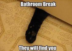 Bathroom Break: They will find you.