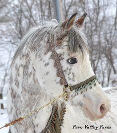 R KHASPER - Dominant White/ Max Sabino Horse from Fern Valley Farm