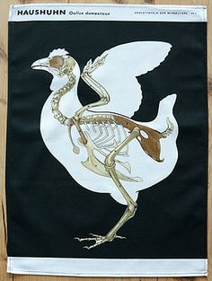 Chicken Anatomy Tea Towel.   RE | Corbridge, Northumberland | REcycled, REscued, REstored, Products | Re-found Objects