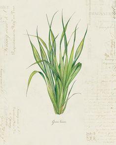 Vintage Botanical Plant Green Leaves on French | Etsy Antique Illustration, Illustration Art, Paper Texture, Collage Sheet, Green Leaves, Cactus Plants, Clip Art, Antiques, Prints