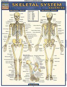 Medical Terminology: The Basics: Laminate Reference Chart . Skeletal System, Circulatory System, Respiratory System, Endocrine System, Vincent Perez, Human Skeleton Anatomy, Nursing Mnemonics, Human Body Systems, Muscular System