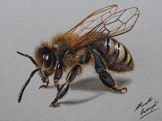Can you read my honeybee report?