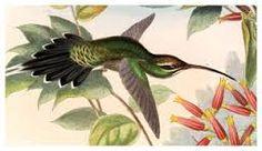 Resultado de imagen para pinturas de orquideas y colibries